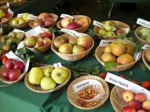 apples-954932__340