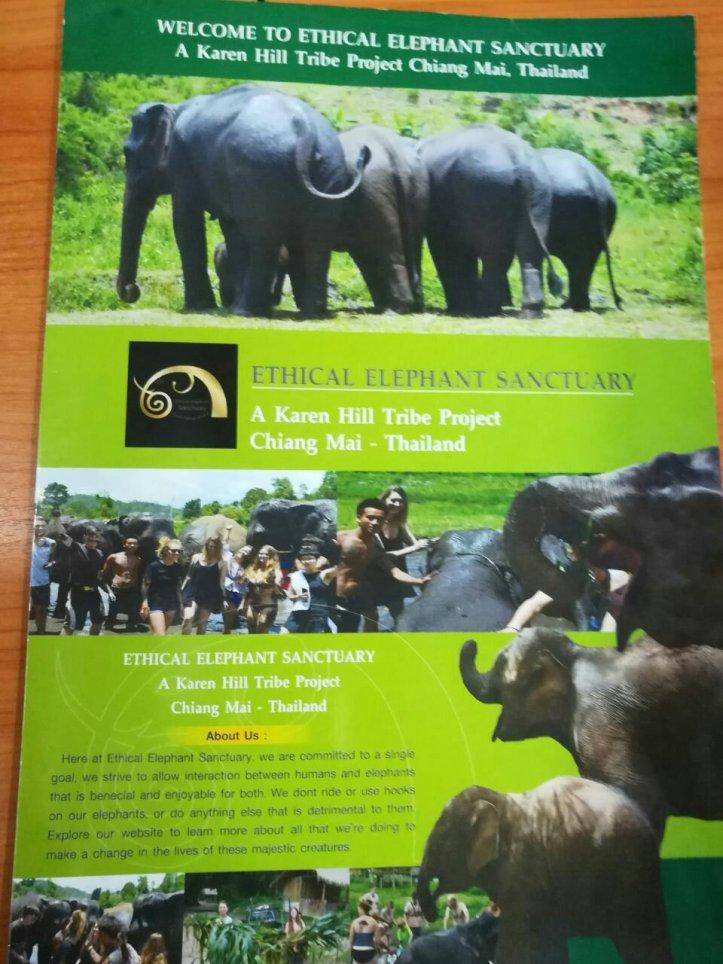 Elefantenfarm Thailand Chiang Mai
