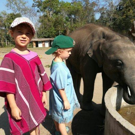 Elefantenfarm in Chiang Mai