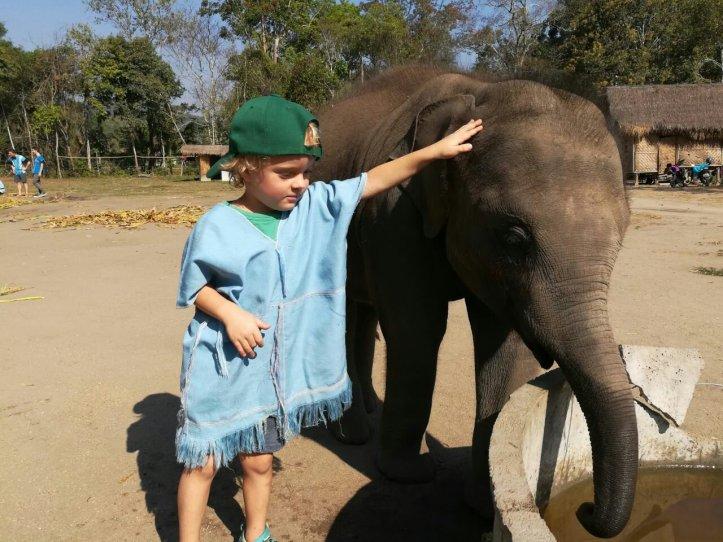 Elefantenbaby auf der Farm in Chiang Mai