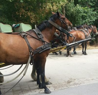 Wattwagenpferde in Cuxhaven
