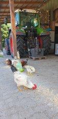 Tiere auf dem Hof Peine Cuxhaven