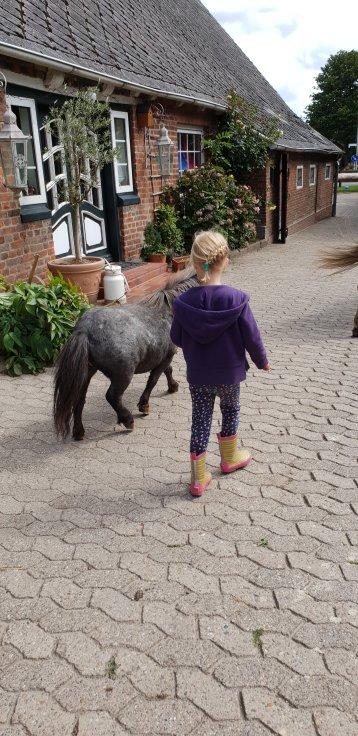 Reiter und Bauernhof Peine Cuxhaven Holte-Spangen